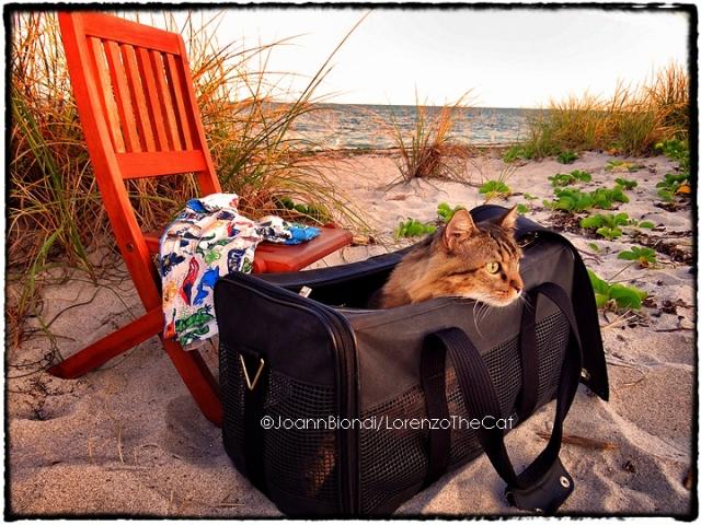 Beach-Bag-Biondi