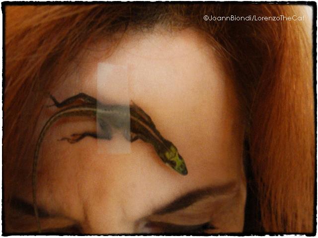 Lizard Joann Biondi